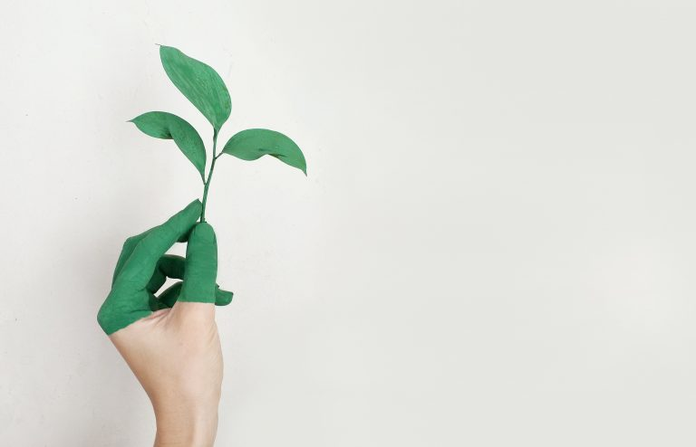 Firm growth with SME advice
